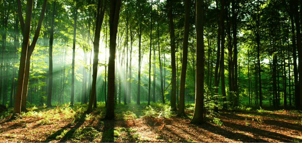 deinBIR Natur Wald